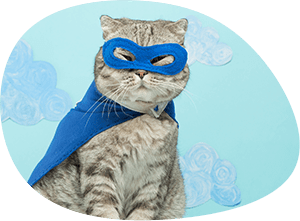 superhero-cat