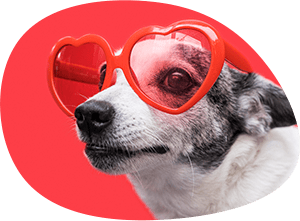 dog-with-sunglasses